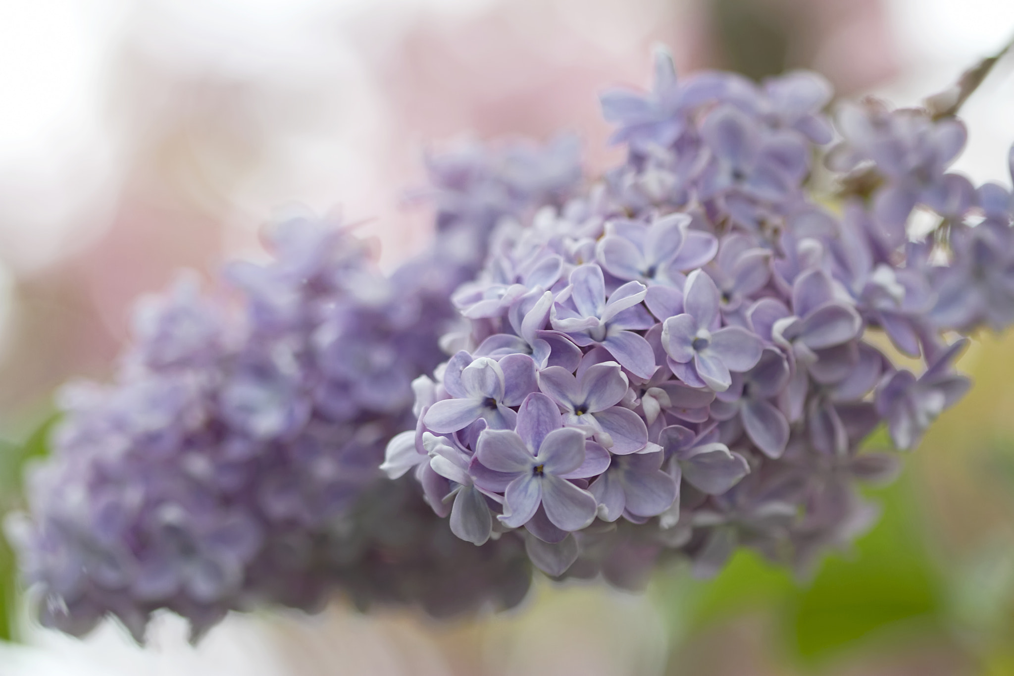 Photograph Scentillating by Renae Smith on 500px