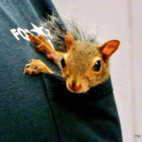 Pocket Squirrel by Pam Jones (pmincevich)) on 500px.com
