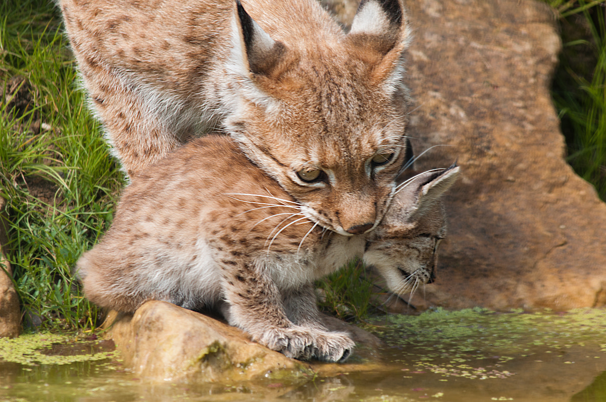 Photograph Mother Care by Rob Janné on 500px