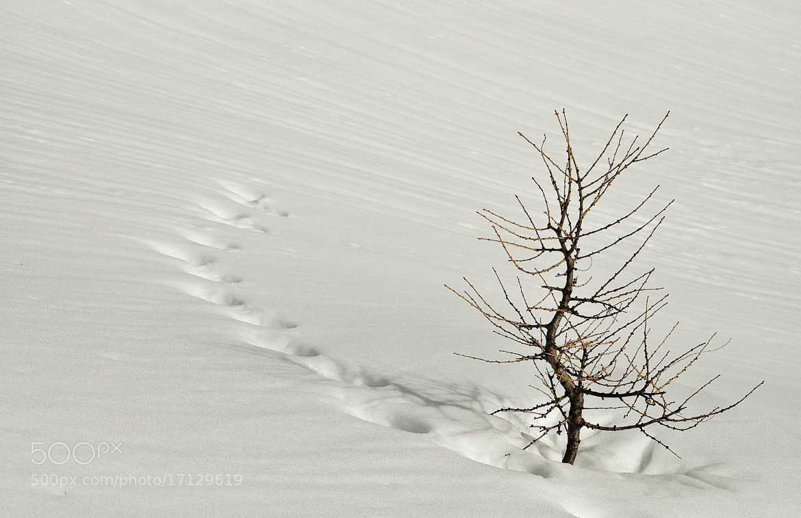 Photograph Alone in the snow by Gitta Sladič on 500px