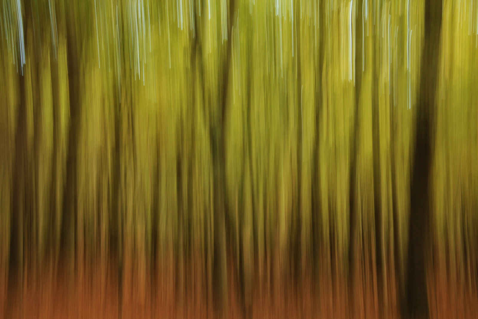 Photograph Autumn trees by Joost Lagerweij on 500px