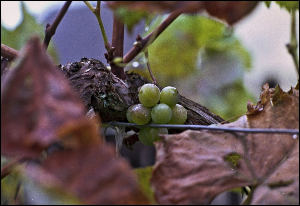 Photograph Wine - my attempts by Michal Horák on 500px