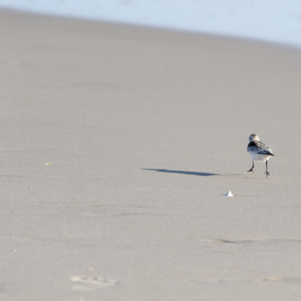 Running down the beach, Canon EOS REBEL T3, Canon EF 100-400mm f/4.5-5.6L IS