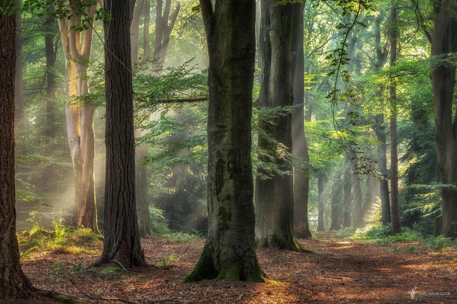 Sterrenbos by Lars van de Goor on 500px.com