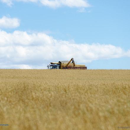 Harvest Skyline