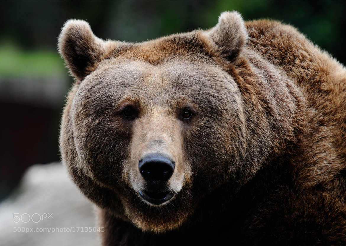 Photograph Oso by Miguel  Martínez on 500px