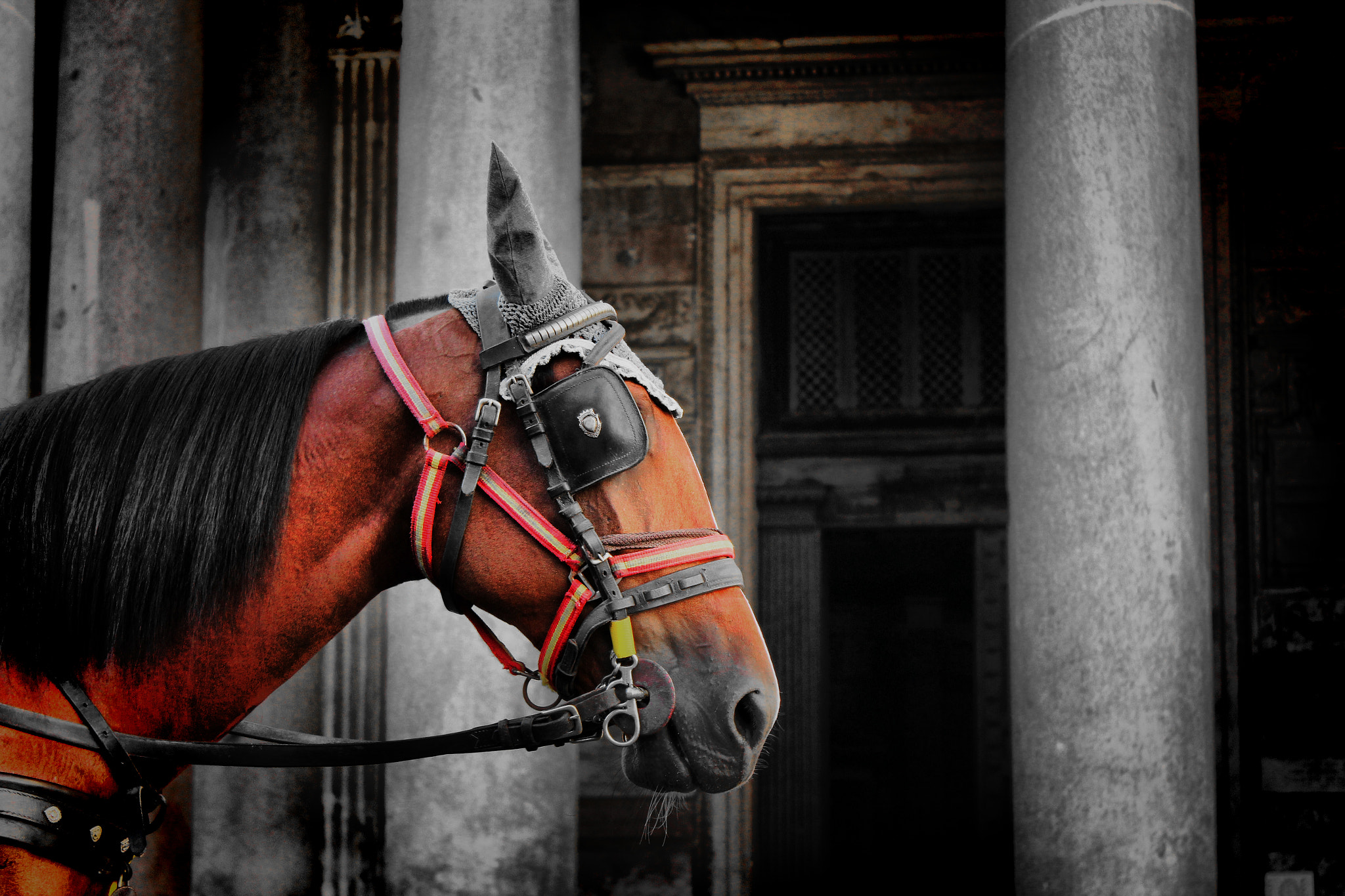 Photograph Horse to Rome by Tassan Giuseppe on 500px