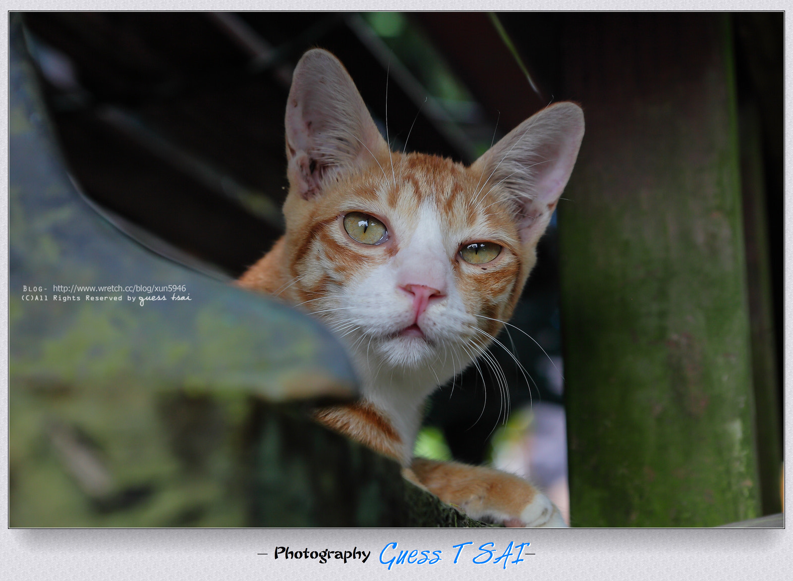 Photograph Cat by Guess Tsai on 500px