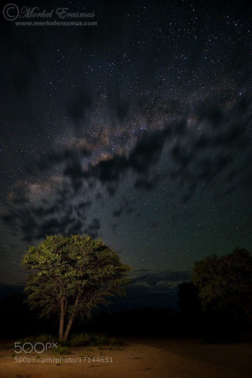 Photograph A tree and some stars by Morkel Erasmus on 500px