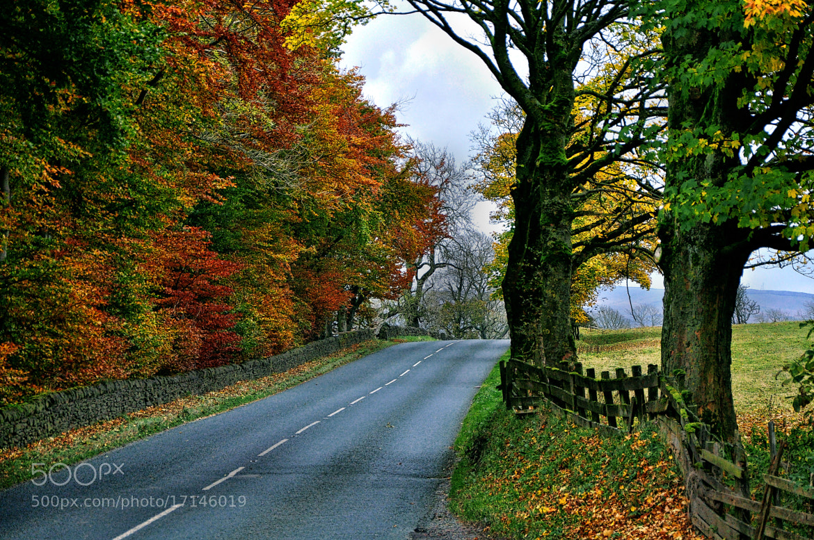 Photograph Autumn Colour In North Yorkshire. by Martin Pinker on 500px