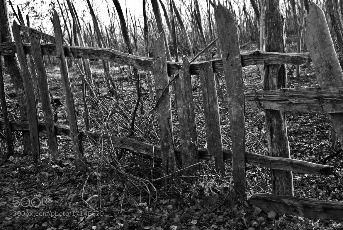 Photograph Old wooden fence by paul malaianu on 500px