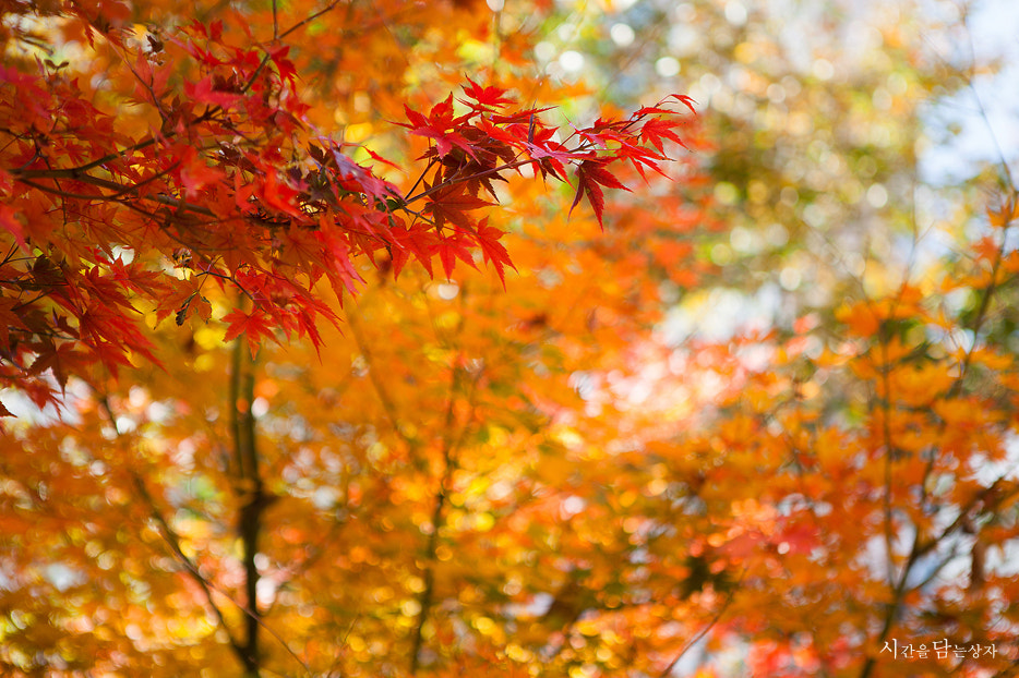 Photograph aumtum colors by woo seok on 500px