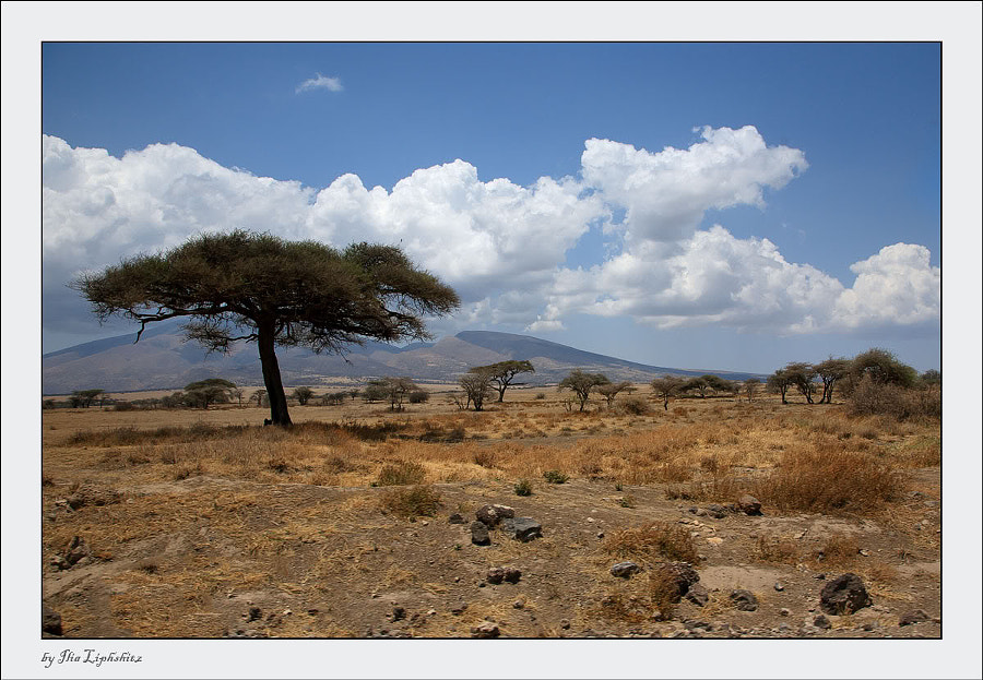 Serengeti landscapes №7