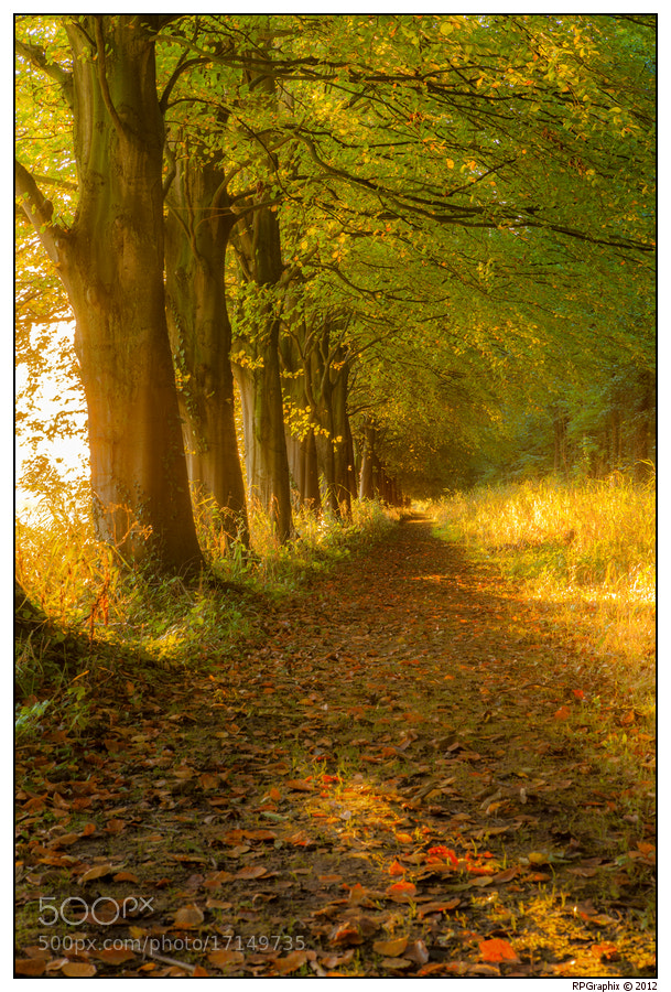 Photograph Autumn Lane by Ruud van Putten on 500px