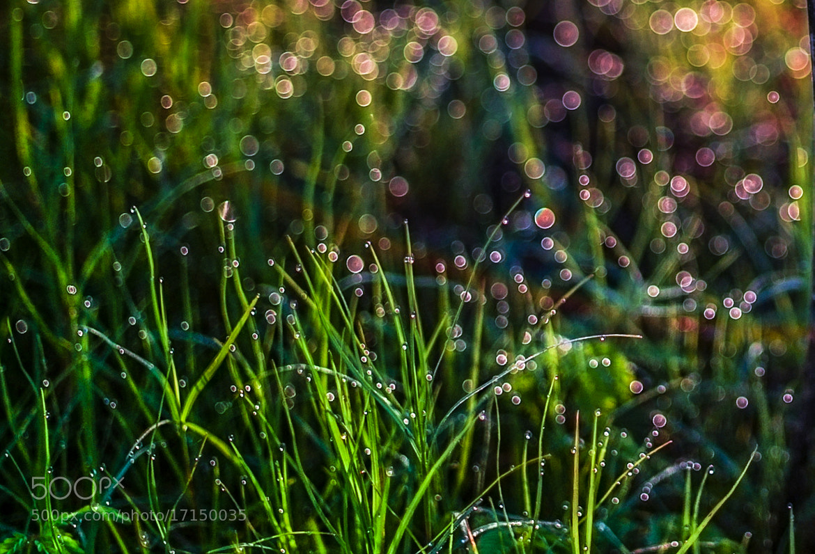 Photograph Morning dew by love leica on 500px