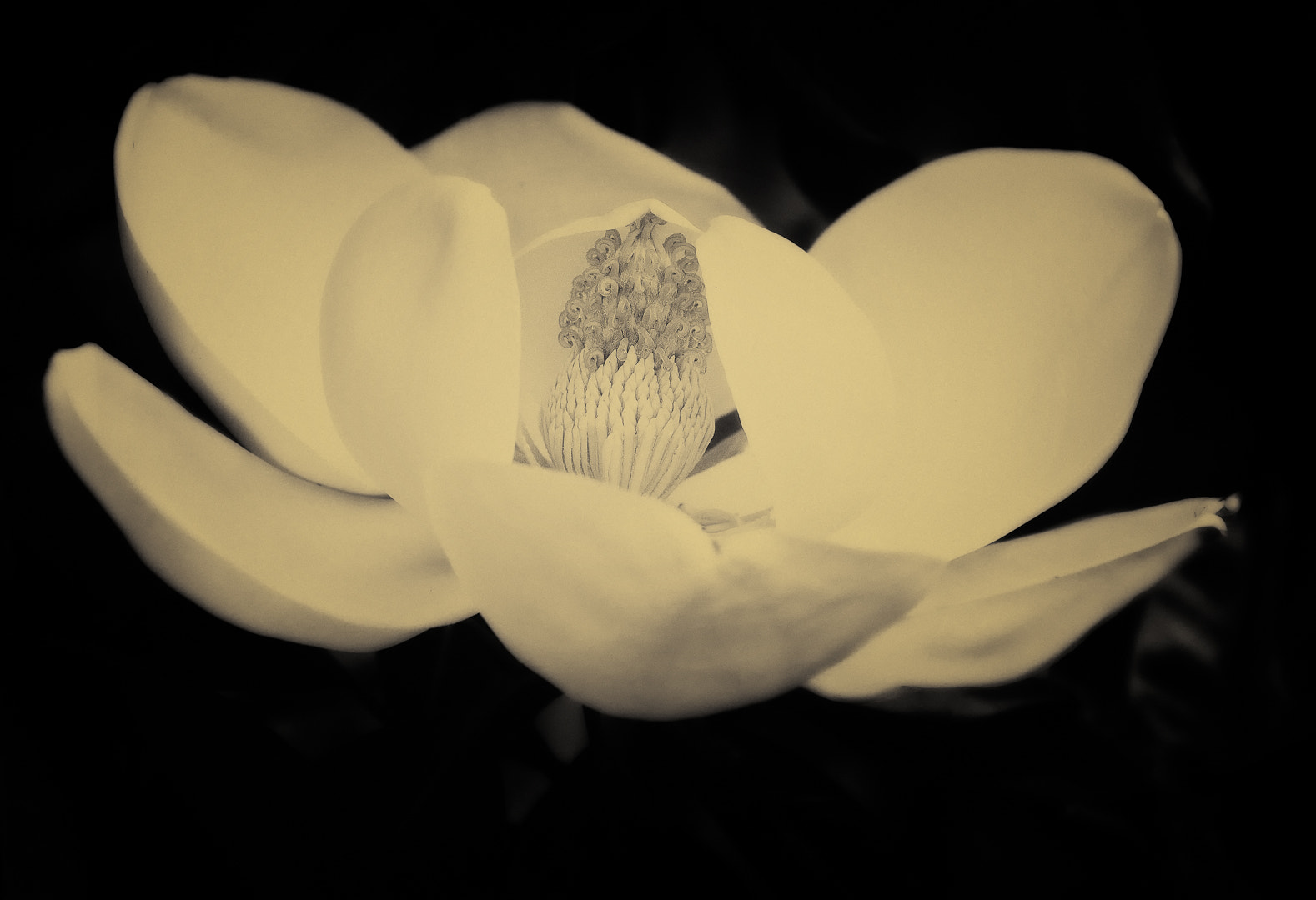 Photograph Southern Magnolia by Ron McKitrick on 500px