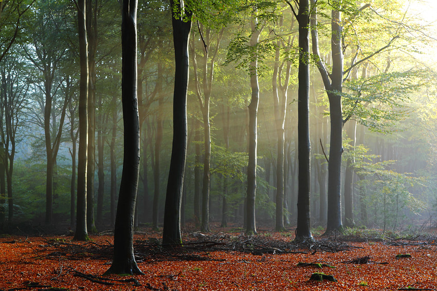 Photograph 2nd Forest by Johannes van Donge on 500px