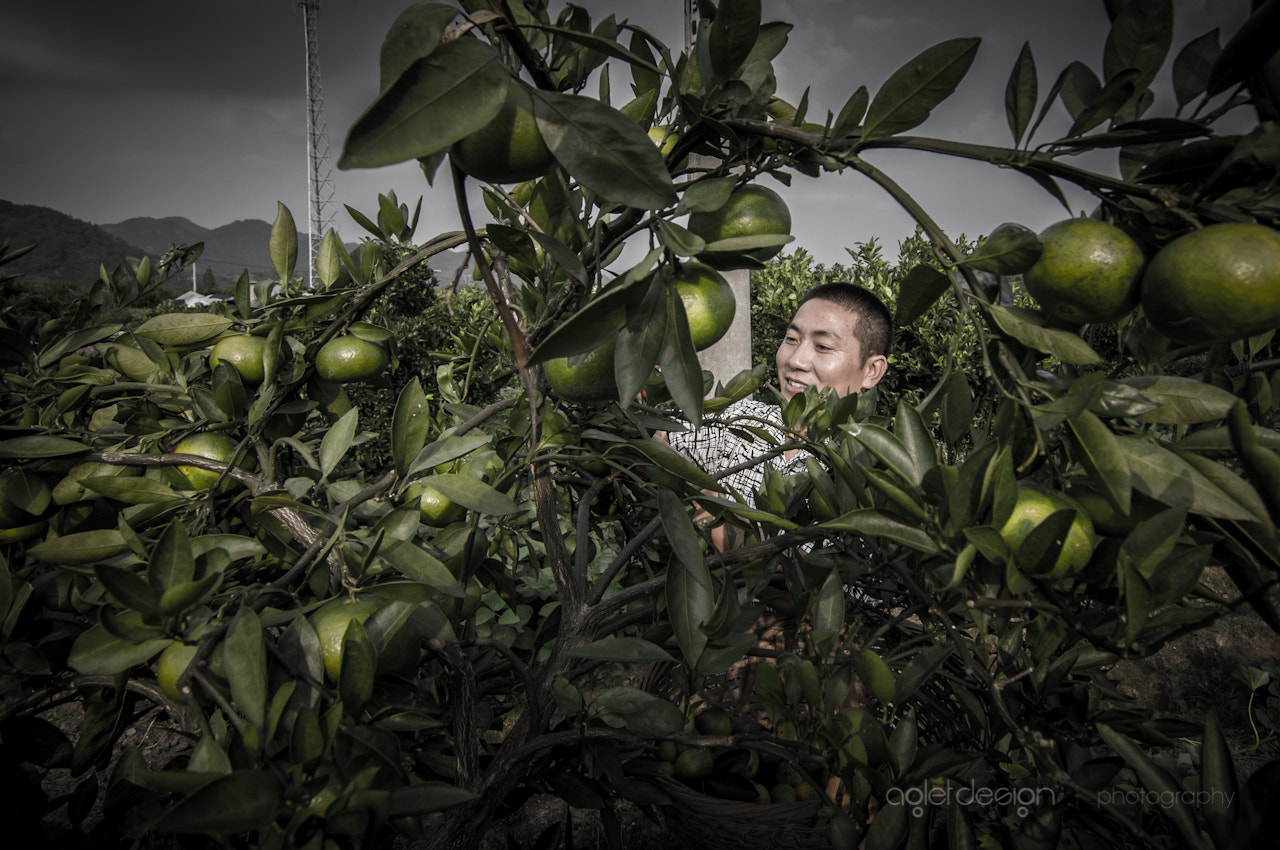Photograph Orange Picking by Raghunath Rajaram on 500px