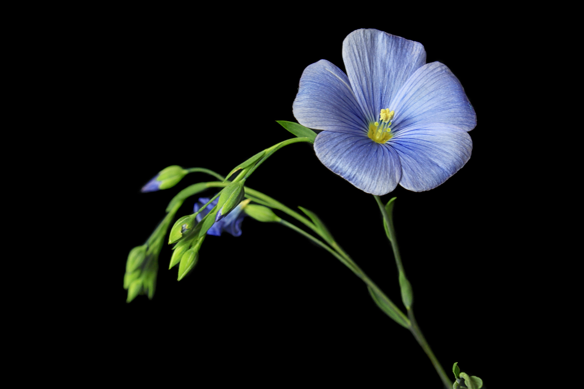 Photograph Blue by Vendenis   on 500px