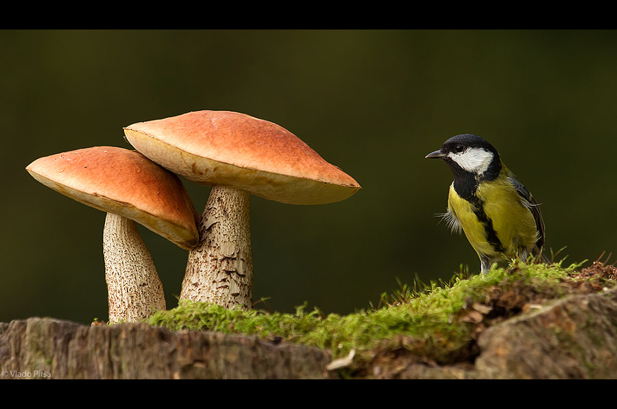 mushrooms and birds by Vlado Pirša on 500px.com