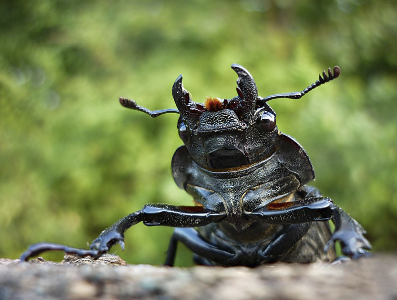 Photograph The Giant of Insects as an Ant Sees It. by istvan froghunter on 500px