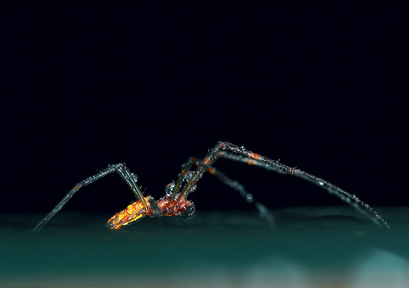 Photograph .../\/\.Spider./\/\... by Bu Balus on 500px