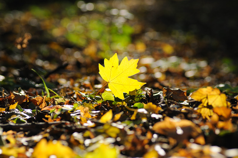 Photograph One autumn day by Denis Bychkov on 500px