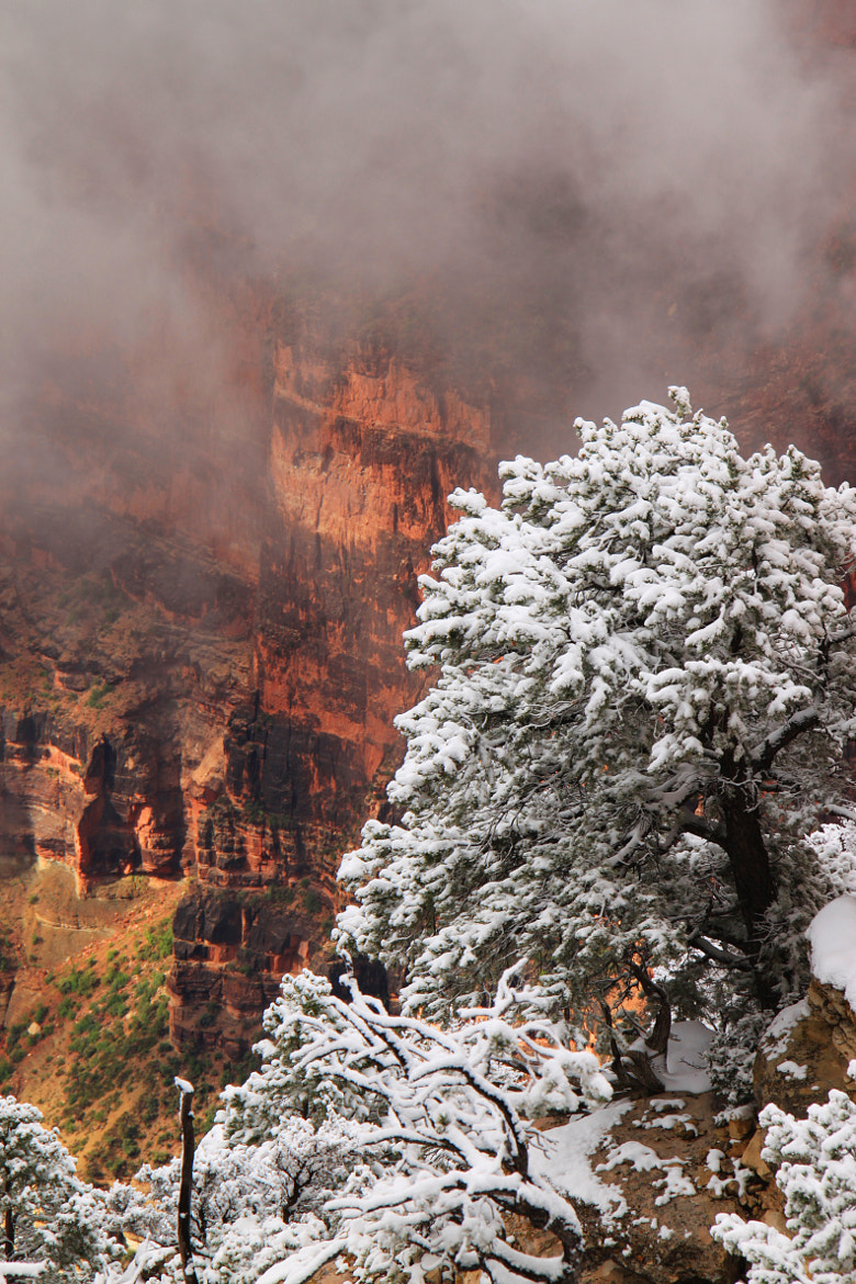 Photograph Snow in Spring (Grand Canyon) by Jacky CW on 500px