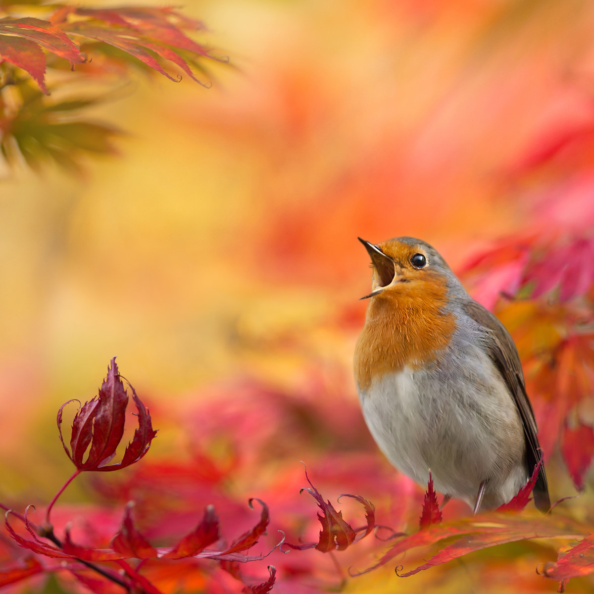 Photograph Autumn fantasy by Teuni Stevense on 500px