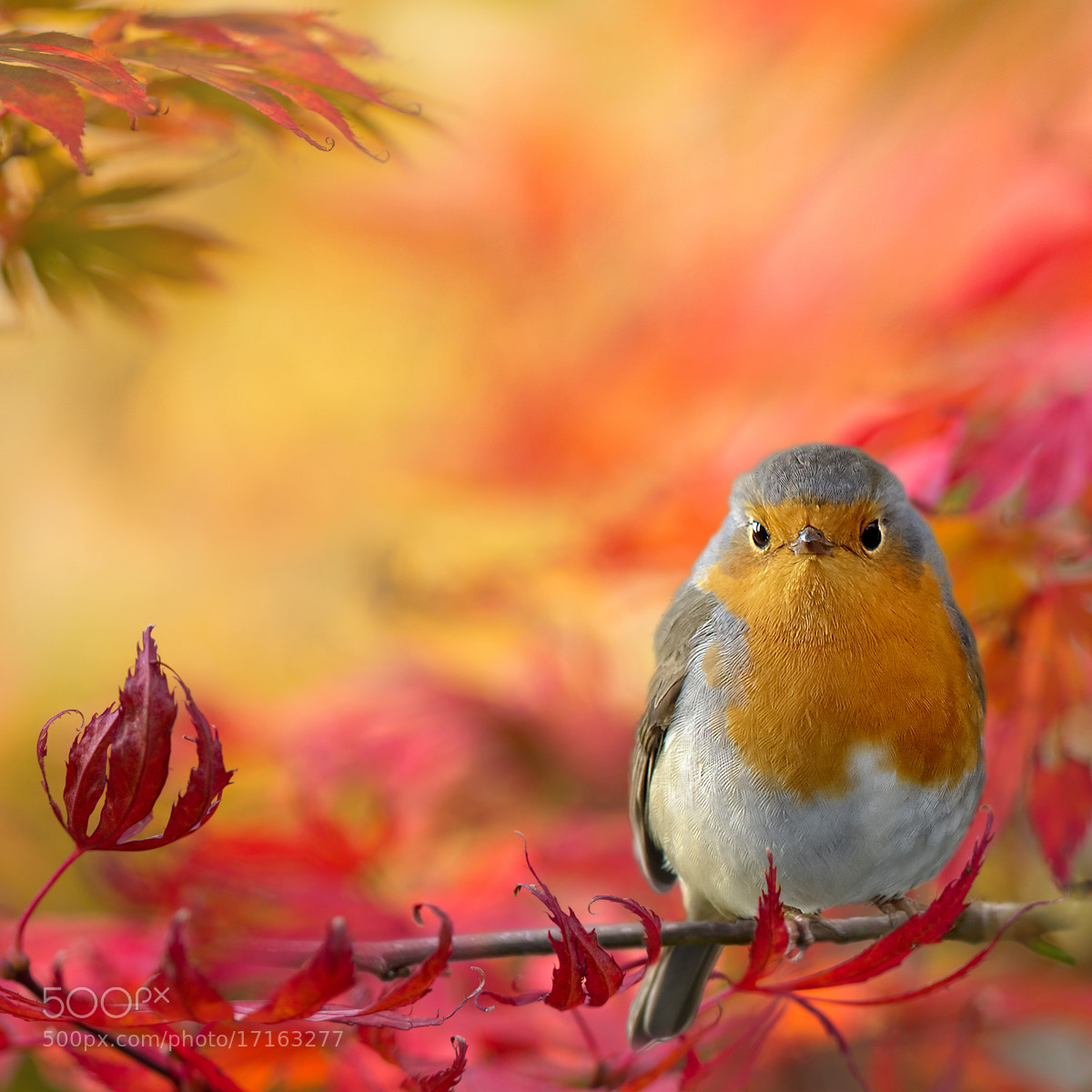 Photograph Autumn fantasy 2 by Teuni Stevense on 500px