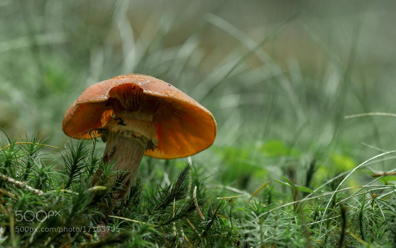 Photograph Mushroom by Jack Skellington on 500px