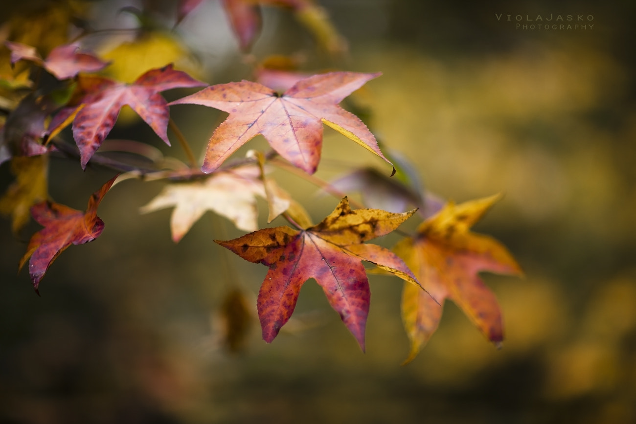 Photograph Rich in Color by Viola Jasko on 500px