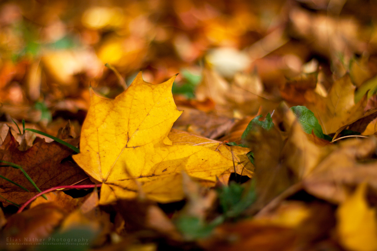 Photograph Autumn Leaves by Elias Näther on 500px