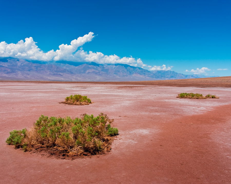 Badwater Basin in the Death Valley National Park, which is the lowest spot in the USA at 282 ft below sea level.