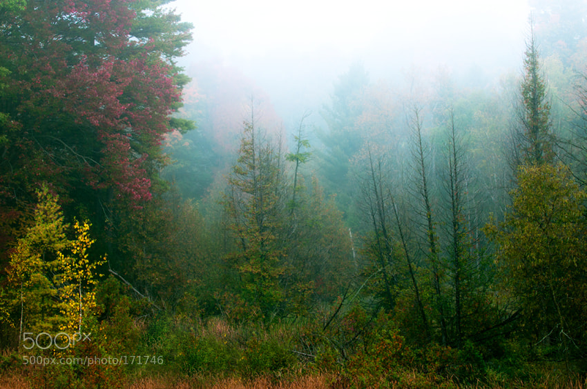 Photograph Morning Fog by Katia Trudeau on 500px