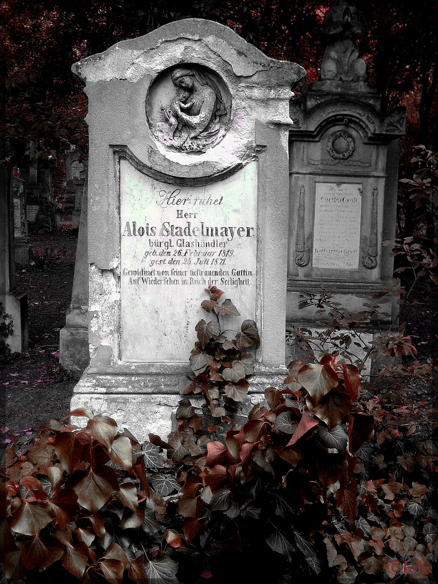 Photograph St Marx Cemetery 4, Vienna by Betty Ditscheid-Zweers on 500px
