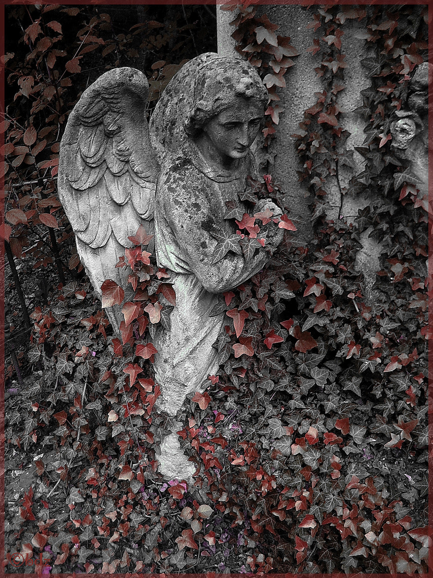 Photograph St Marx Cemetery 5, Vienna by Betty Ditscheid-Zweers on 500px