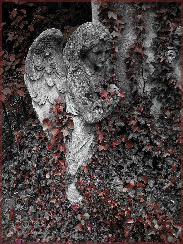 Photograph St Marx Cemetery 5, Vienna by Betty Ditscheid on 500px