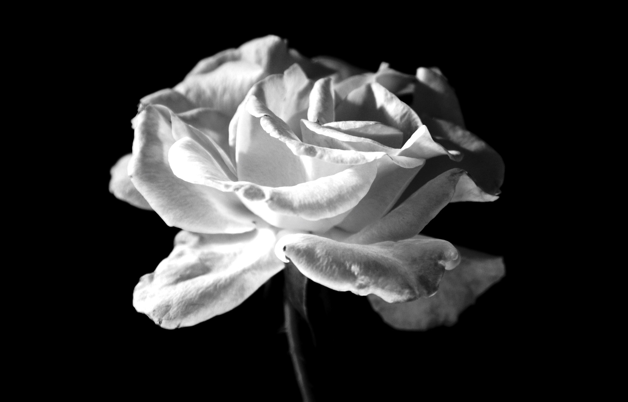 Photograph Whiter Shade of Pale by Lilly C. on 500px
