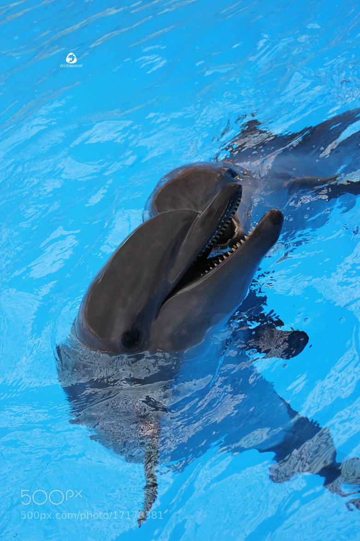 Photograph Dolphin... by Ani Gasparyan on 500px