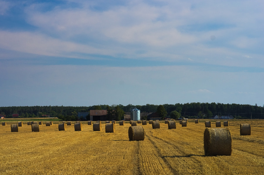 Field after harvest by Aleksander Kwiatkowski on 500px.com