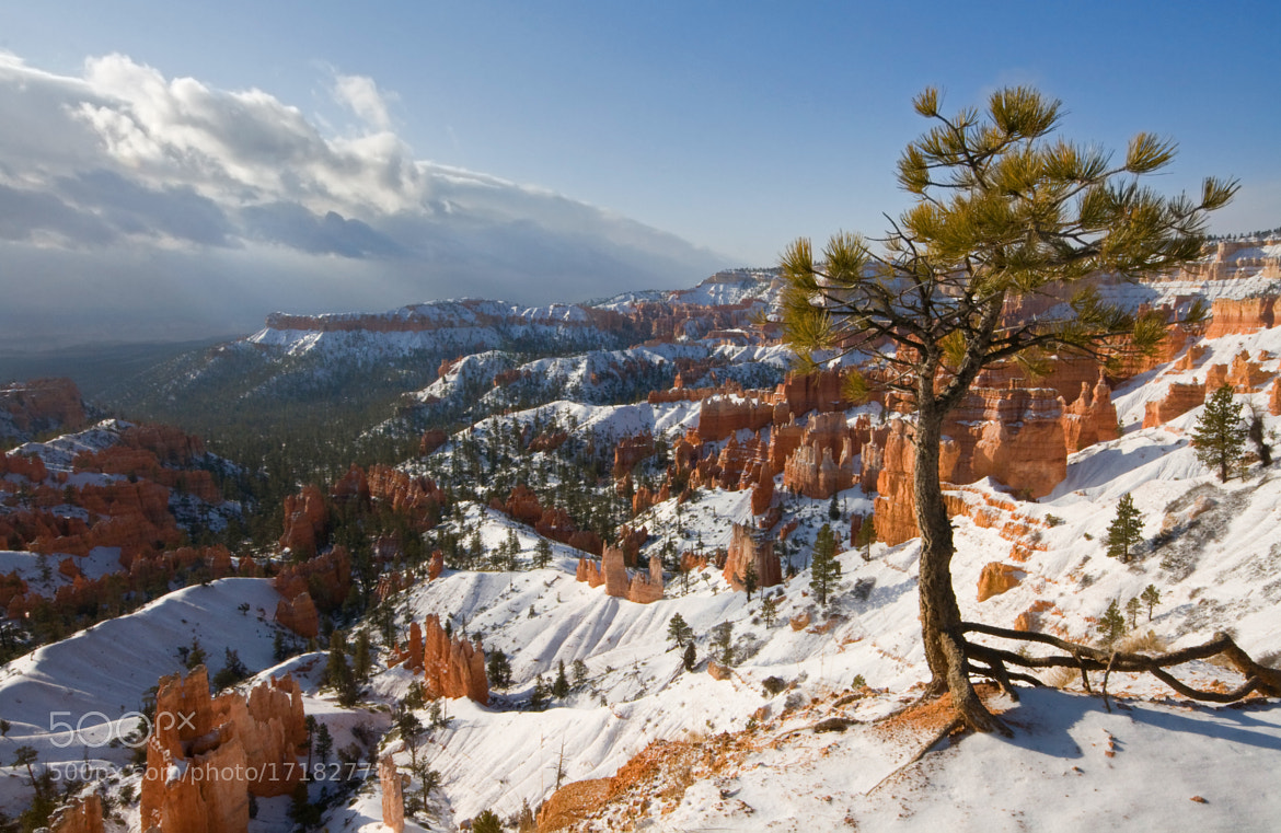 Photograph Bryce snowscape by Rachael Talibart on 500px