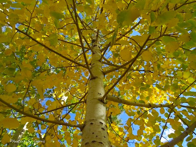 Photograph Aspen by Carra Riley on 500px