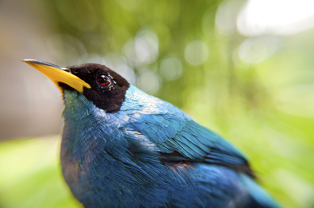 Photograph Blue Bird by Pablo Buitrago on 500px