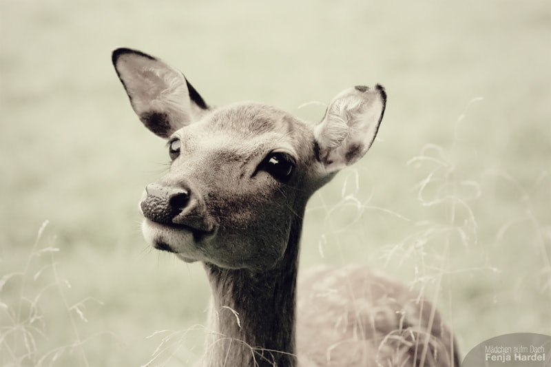 Photograph Bambi-eyes... by Mädchen auf'm Dach on 500px