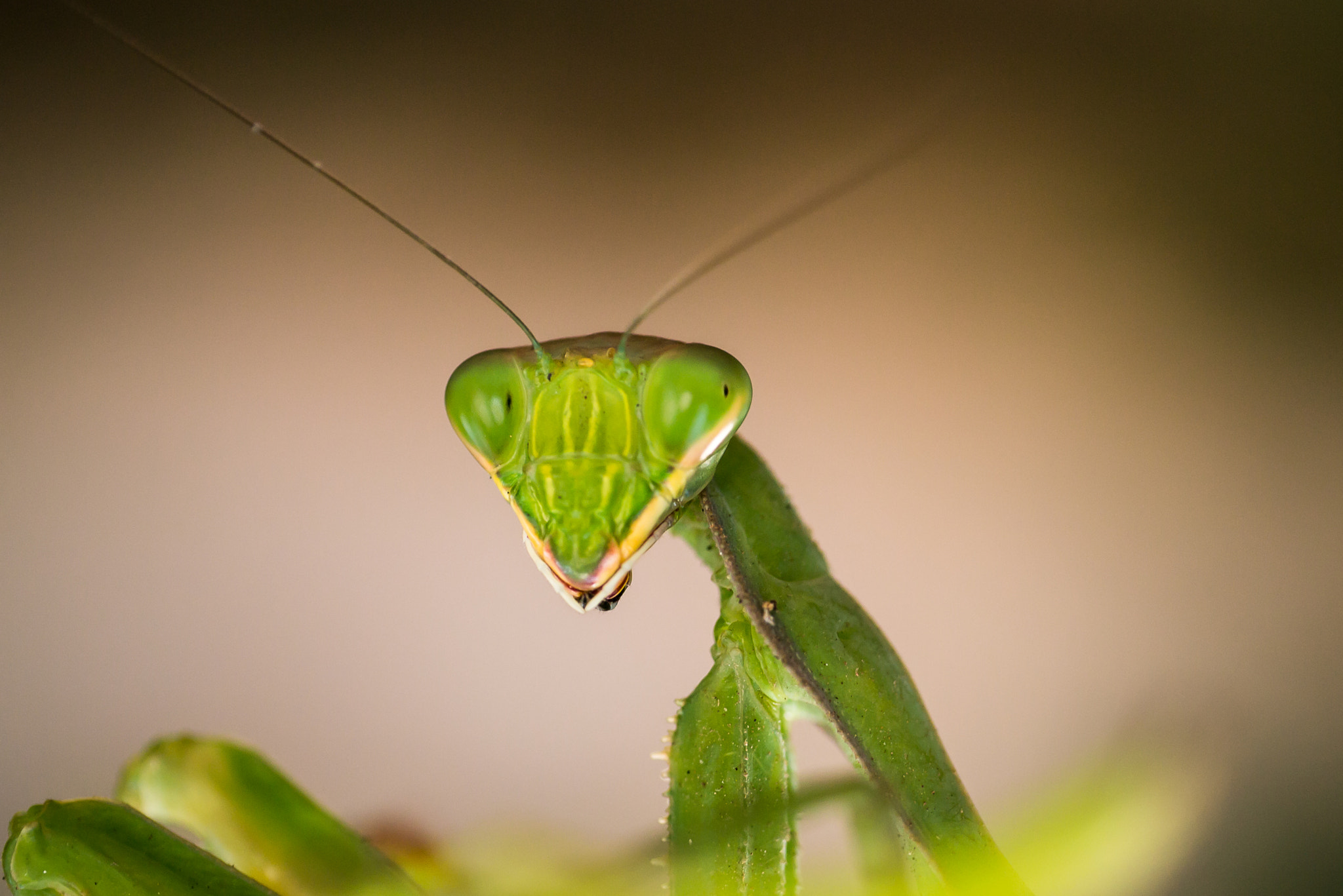 Photograph Mantis by Amine Fassi on 500px