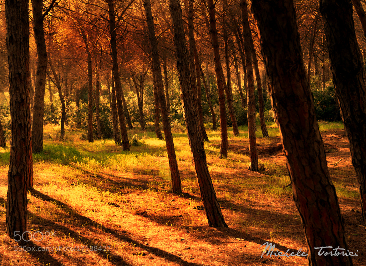 Photograph Forest #2 by michele  tortorici on 500px
