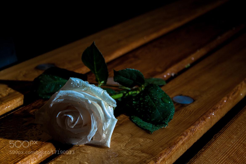 Photograph Dark Rose by Shaun Groenesteyn on 500px
