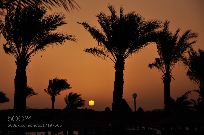 Photograph Ägypten Sonne Palmen by Alexander Funk on 500px
