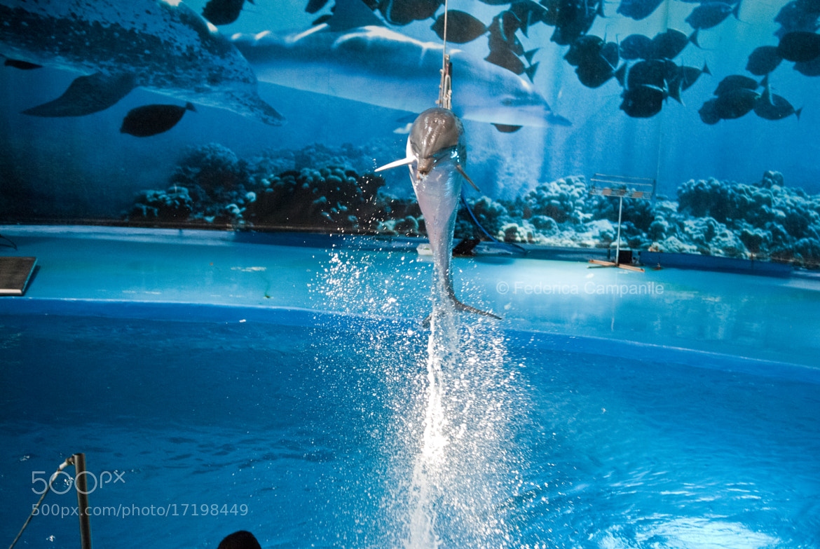 Photograph Dolphin by Federica Campanile on 500px